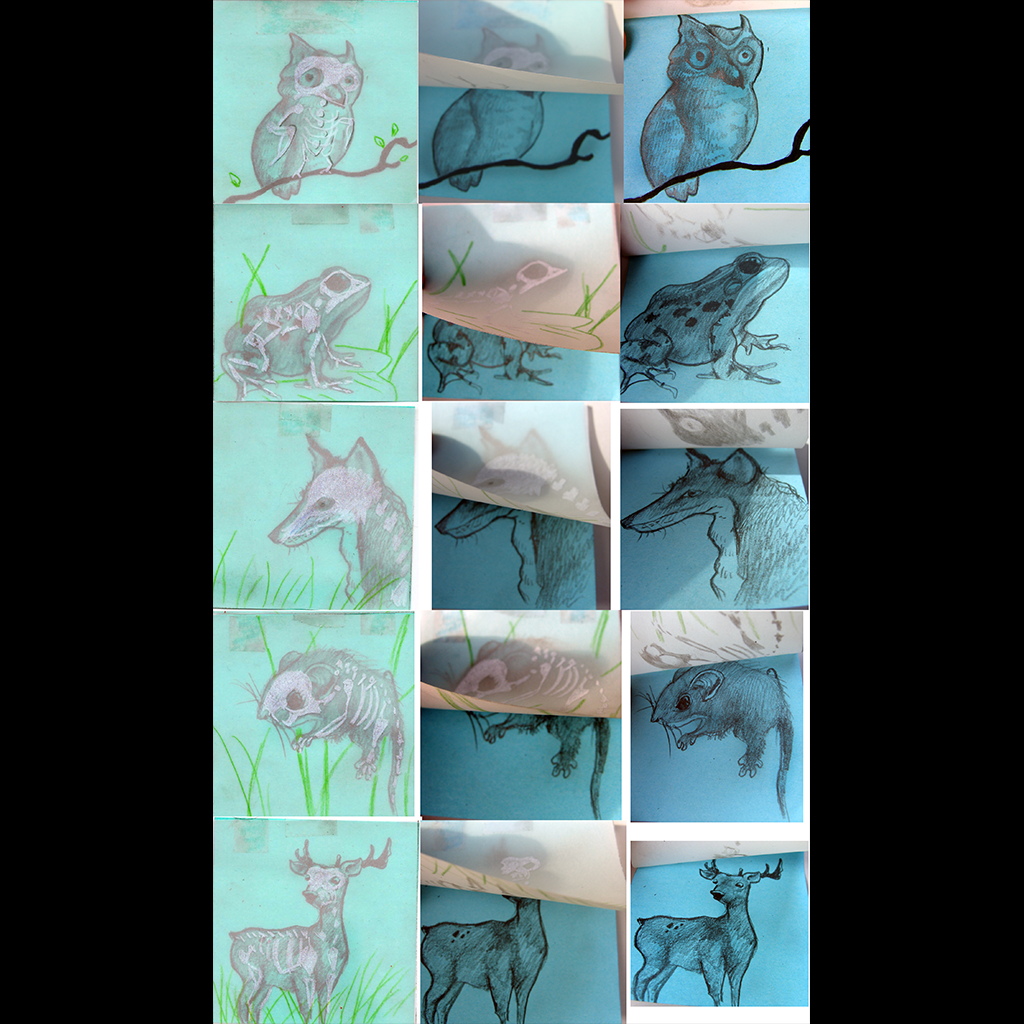 JaredKonopitski-1024-19-Vellum Animal Skeleton Post ITs